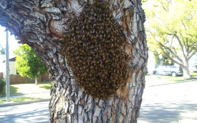 bee response 14