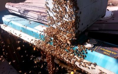 bee response 17