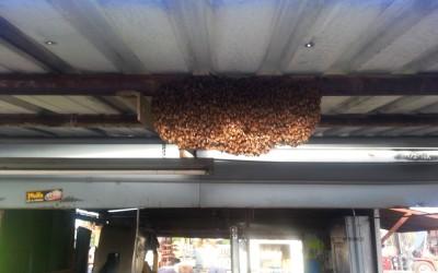 bee response 18