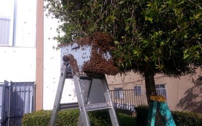 bee response 19