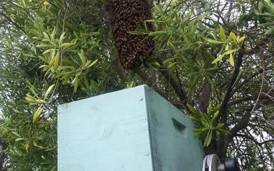 bee response 2