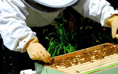 bee response 23