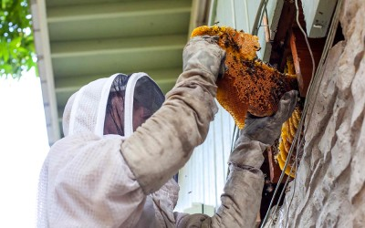 bee response 27