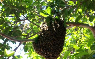 bee response 3