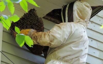 bee response 30