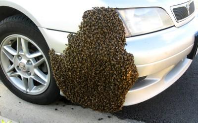 bee response 31