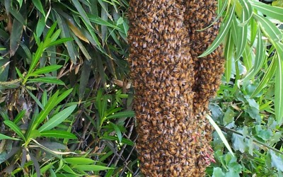 bee response 4