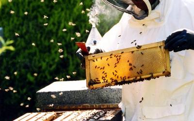 bee response 6
