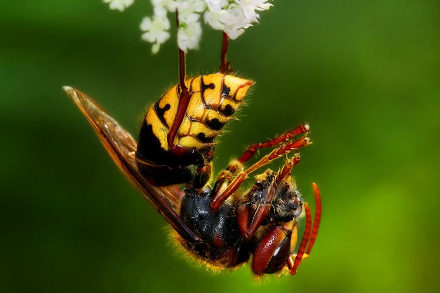 Hornets 3
