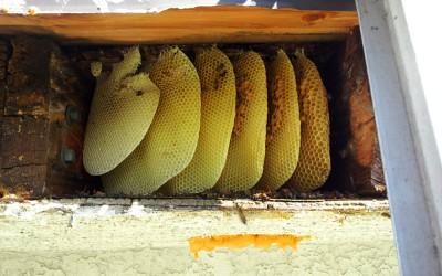 bee response 10