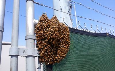 bee response 15