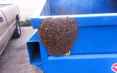 bee response 20