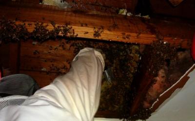 bee response 21