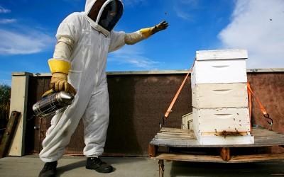 bee response 24