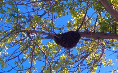 bee response 25