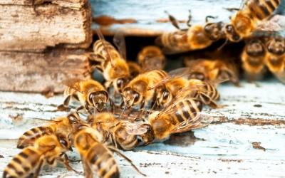 bee response 26