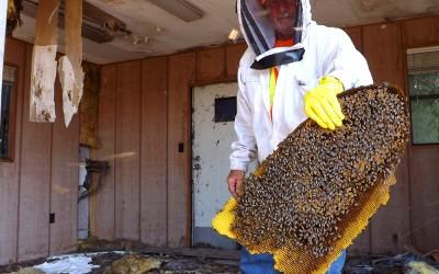 bee response 28
